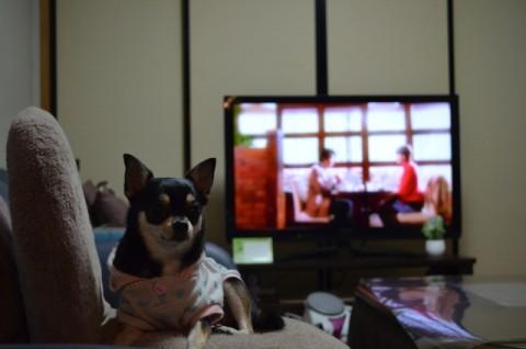 テレビと犬